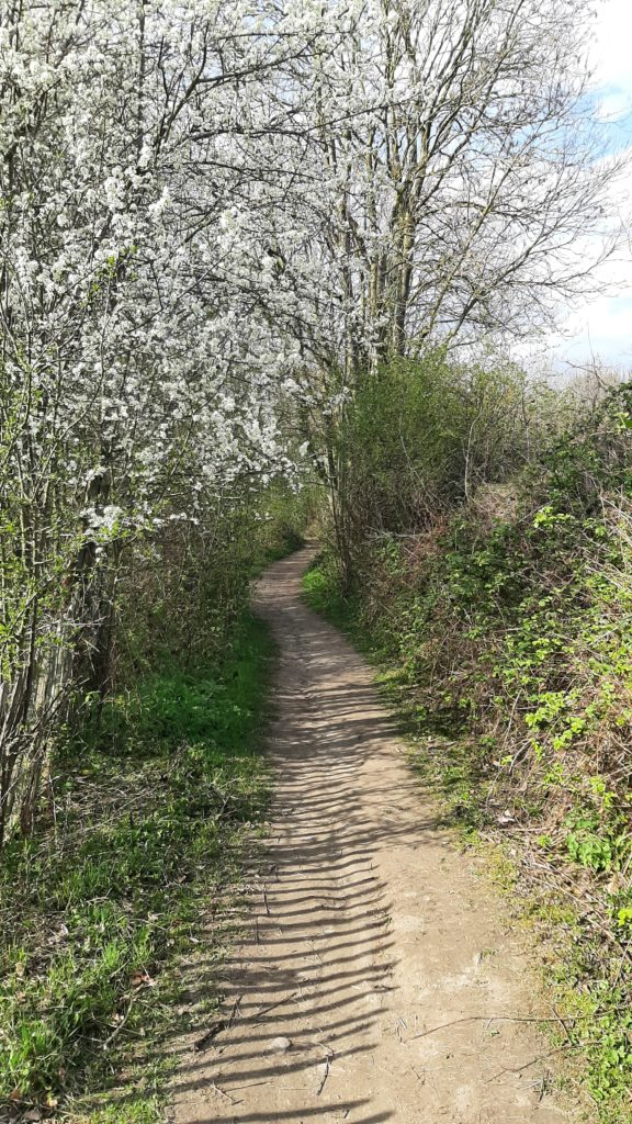 Au crépuscule du Mont-Saint-Aubert - Le sentier du bois